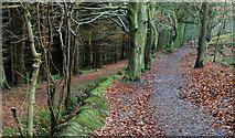 J4477 : Path, Cairn Wood near Belfast (2) by Albert Bridge
