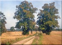 SK4664 : Farm track to Ault Hucknall by Trevor Rickard
