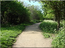 TQ3187 : Parkland Walk by Oxyman