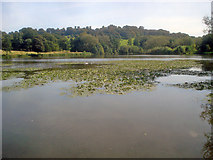 SK4563 : Great Pond - 1 by Trevor Rickard