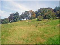 SK4563 : Path to Hardwick Hall by Trevor Rickard
