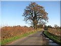 TM1885 : View east along Semere Lane by Evelyn Simak