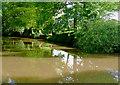 SJ6541 : Reflections and shadows near Coxbank, Cheshire by Roger  Kidd