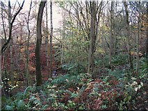 NY8563 : The cleugh of Threepwood Burn in Dinnetley Wood by Mike Quinn