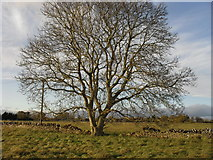 SP2504 : Field boundary and tree by andrew auger