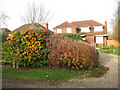 TM1598 : Autumnal shrubs in Wymondham Road by Evelyn Simak