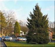 SJ9690 : Compstall Christmas Tree 2009 by Gerald England