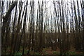 TR1959 : Coppiced trees, Trenleypark Wood by N Chadwick