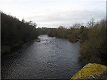 NZ2115 : River Tees at Piercebridge - view west by Philip Barker