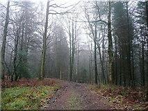 SO6210 : Winter scene, Forest of Dean by Jonathan Billinger