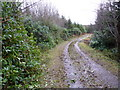 H6116 : 'Rhododendron drive' on Black Island, Dartrey by D Gore
