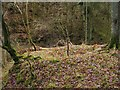 NS4178 : Remains of a lime-kiln by Lairich Rig
