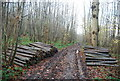 TR1959 : Log piles on both sides of the Stour Valley Walk, Trenleypark Wood by N Chadwick