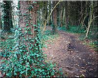 J3269 : Woodland path, Belfast by Rossographer