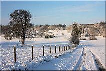 TL8162 : Track in Ickworth Park by Bob Jones
