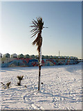 TQ2704 : Frozen Palms, Hove Lagoon by Simon Carey