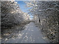 NZ5416 : Snow-laden trees in Flatts Lane (view north-east) by Philip Barker