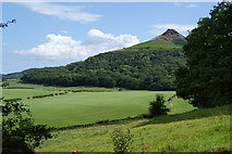 NZ5712 : Roseberry Topping above Newton Wood by Bill Boaden