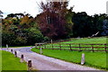 N1677 : Longford - Carrigglas Manor House - Entrance drive by Joseph Mischyshyn