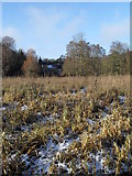 SU9948 : Melting snow in the riverside meadow south of Shalford Road by Basher Eyre
