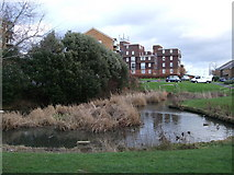 TQ4001 : Lake Park Pond, Peacehaven by Paul Gillett