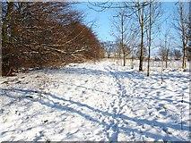 NS4178 : Footpath near Beechwood Estate by Lairich Rig