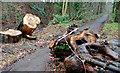 J3168 : Fallen tree, Barnett Demesne, Belfast by Albert Bridge
