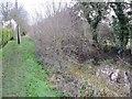 SU3788 : Canal  by the hedge by Bill Nicholls