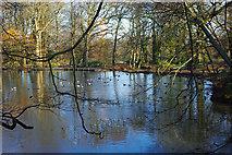 TQ2636 : Pond, Goffs Park by Robin Webster