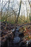 TQ6895 : Splash in Norsey Wood by Glyn Baker