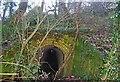 TQ6895 : Norsey Culvert by Glyn Baker