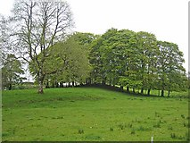 G8303 : Clump of trees on the Rockingham Demesne by Oliver Dixon