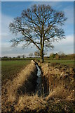 SP0058 : Tree and ditch at Gannow Farm by Philip Halling