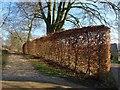 ST7993 : Beech hedge, Ozleworth by Derek Harper