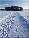 NZ5216 : Track leading to copse south of Ormesby Grange Farm by Stephen McCulloch