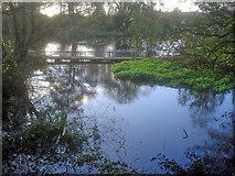 SK5451 : Mill pond near Papplewick by Trevor Rickard