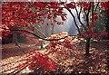 ST8489 : Woodland magic by Anthony Volante
