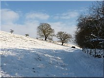 SK2468 : Flock of sheep coming over brow of snow covered hill by Peter Barr
