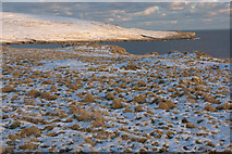 HP6410 : Tussocky grassland at Hagdale in the snow by Mike Pennington