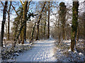 TM0972 : Woodland walk in the snow by Andrew Hill