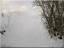 NT5247 : Southern Upland Way leaving Lauder by Richard Webb