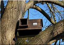 ST8992 : Barn owl box, Tetbury churchyard by Derek Harper