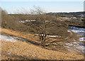 SS8677 : Solitary tree, Merthyr Mawr Warren by eswales