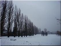 TQ3095 : Poplar Avenue, Oakwood Park, London N14 in the snow by Christine Matthews