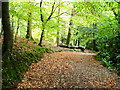 J3631 : Tollymore Forest Park by GARRY HARPER