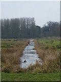 TM4492 : Drainage ditch, near Aldeby by John Courtney