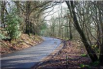 TQ4838 : Beech Green Lane by Robin Webster