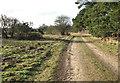 TF7801 : Farm track in Gooderstone Warren by Evelyn Simak