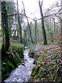 SX0960 : Stream through Poldew Wood by Jonathan Billinger
