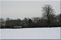 SU5985 : Munching away by Bill Nicholls